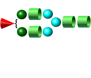 A1 2-AA Glycan