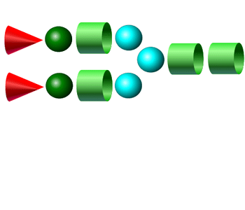 A2 APTS glycan