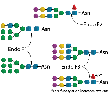 Endo F Multi Kit image
