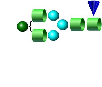 FA2G1 APTS glycan (G1F)