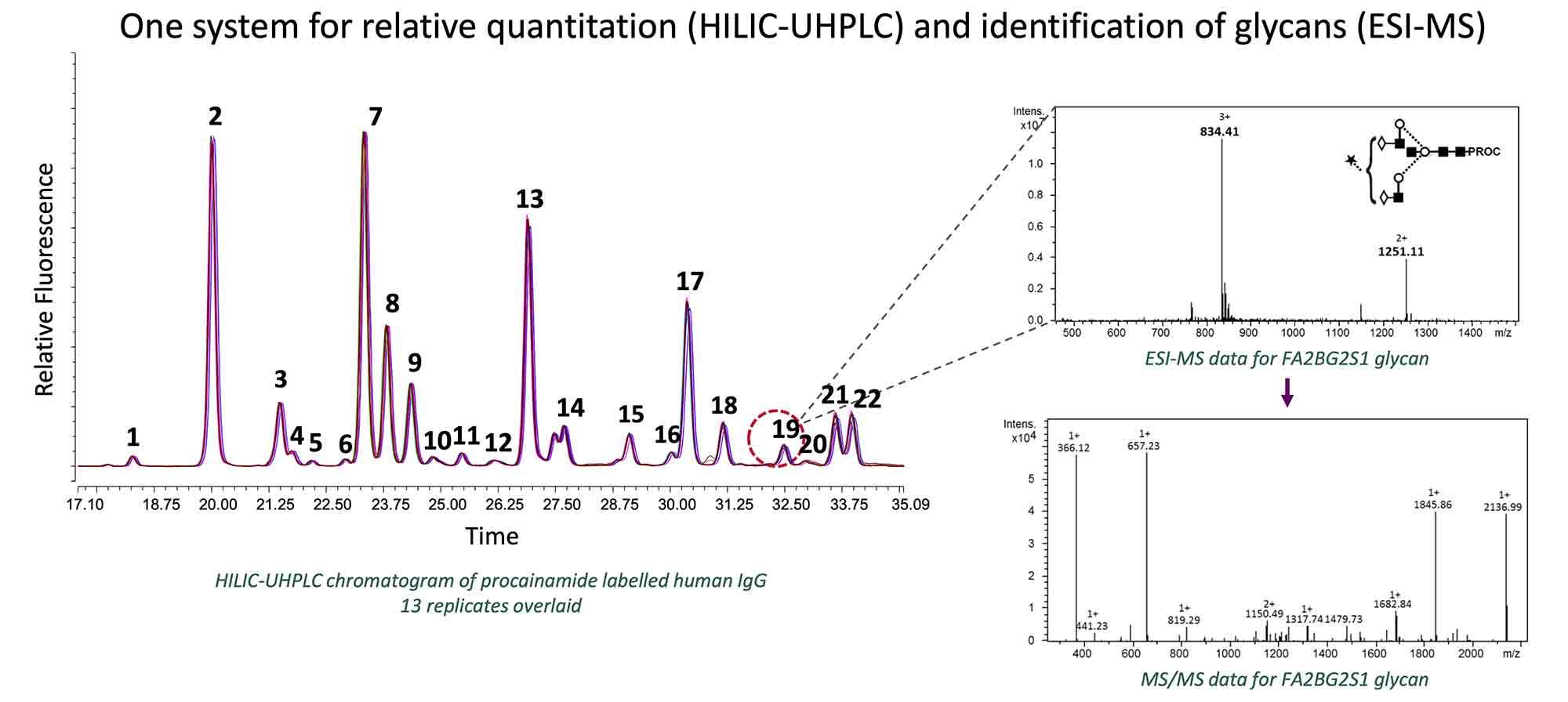 Procainamide LC-MS analysis of human IgG