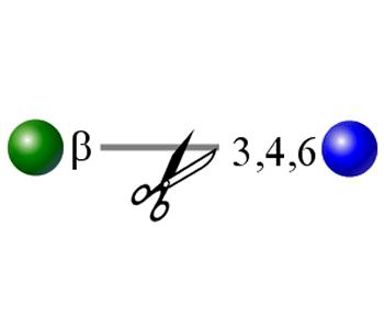 beta-(1-3,4,6)半乳糖苷酶图像