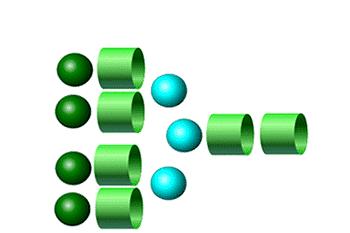 A4 Glycans- 2-AB
