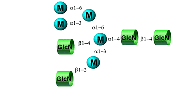 Hybrid glycan image