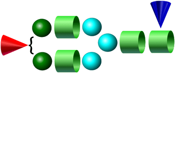 A1F procainamide glycan