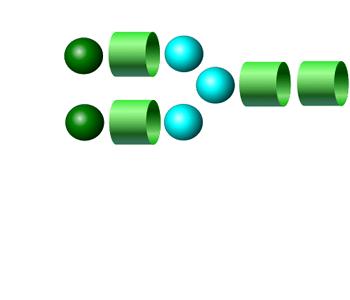 NA2 procainamide glycan (G2)