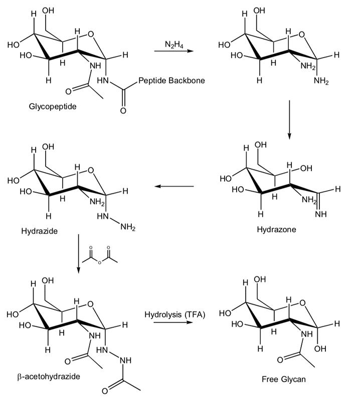 hydrazinolysis reaction image