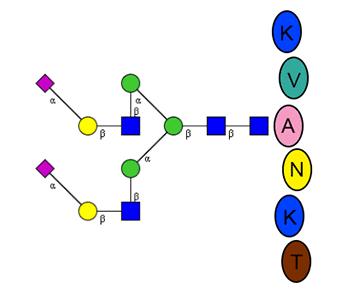 Quantitative Glycopeptide Standard