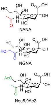 Sialic Acids image
