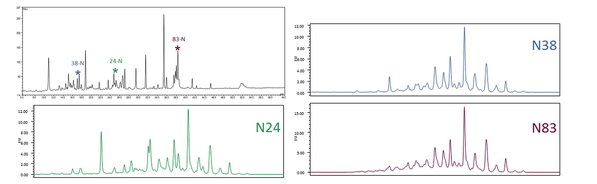 Site specific glycosylation analysis image